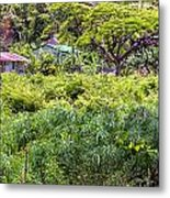 Living Off The Grid In The Waipi'o Valley Metal Print
