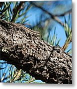 Lizard Bathing In The Sunshine Metal Print