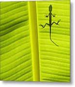 Lizard Leaf Metal Print