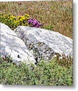 Lizard Protected Granite Boulders Metal Print