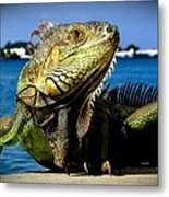 Lizard Sunbathing In Miami Metal Print