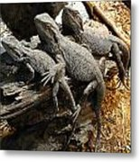 Lizards Metal Print by Les Cunliffe