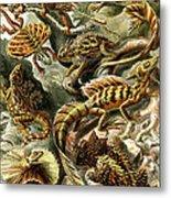 Lizards Lizards And More Lizards Metal Print