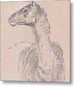 Llama Drawing Metal Print