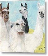 Llama Herd Camelid Farm Ranch Animal Art Metal Print