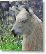 Llama Metal Print by Jack Zulli