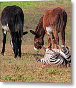 Lmao  Mules And Zebra - Featured In Wildlife Group Metal Print