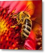 Loads Of Bee Pollen Metal Print