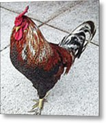 Local Downtown Rooster Metal Print