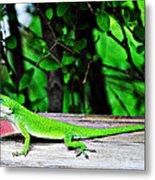 Local Lizard Metal Print by Stephanie Grooms