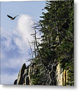 Lofty Bald Eagle Surveys Maines Bold Coast Metal Print