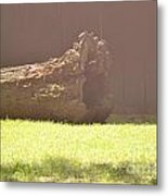 Log In Hazy Sunlight Metal Print
