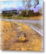 Lone Cypress From Palos Verdes Metal Print