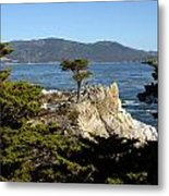 Lone Cypress On 17-mile Drive  Metal Print