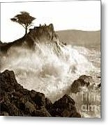 Lone Cypress Tree On  Midway Point Pebble Beach California Circa 1916 Metal Print