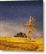 Lone dead tree in paddock Metal Print