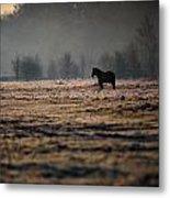 Lone Horse Metal Print