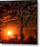 Lone Manzanita Sunset Metal Print