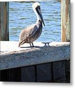 Lone Pelican On Pier Metal Print