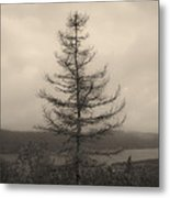 Lone Pine And The Bras D'or Metal Print