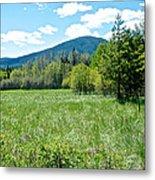 Lone Pine Prairie South Of Polebridge In Glacier Np- Mt  Metal Print