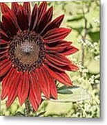 Lone Red Sunflower Metal Print