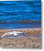 Lone Seagull Metal Print