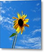 Lone Sunflower In A Summer Blue Sky Metal Print