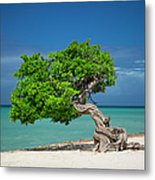 Lone Tree - Aruba Metal Print