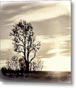 Lone Tree At Dusk Metal Print