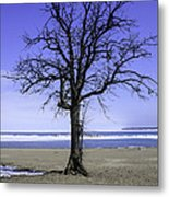 Lone Tree At Fort Gratiot Light House  Metal Print