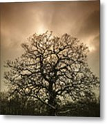 Lone Tree Metal Print by Amanda Elwell