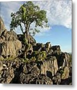 Lone Tree Metal Print by Gordon  Grimwade