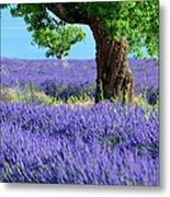 Lone Tree In Lavender Metal Print