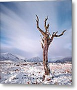 Lone Tree In The Snow Metal Print