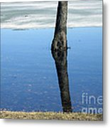 Lone Tree In Water Metal Print