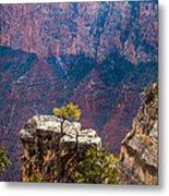 Lone Tree On Outcrop Grand Canyon Metal Print