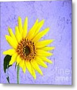 Lone Yellow Daisy Metal Print