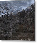 Lonely Bald Cypress Metal Print