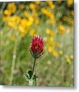 Lonely Clover Metal Print