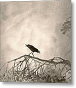 Lonely Cry One Metal Print