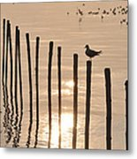Lonely Gull Metal Print