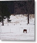 Lonely Horse Metal Print