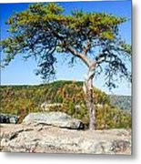 Lonely Lonesome Pine Metal Print