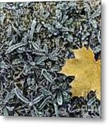 Lonely Maple Leaf And Grass Are Covered With Frost. Metal Print