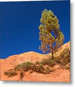 Lonely Pine On The Ocher Hill Metal Print
