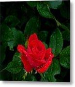 Lonely Rose Metal Print