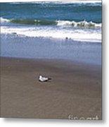 Lonely Sea Gull Metal Print