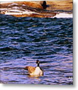 Lonely Swimmer Metal Print