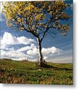 Lonely Tree In Mountain Metal Print